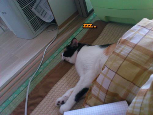 コタツで寝る